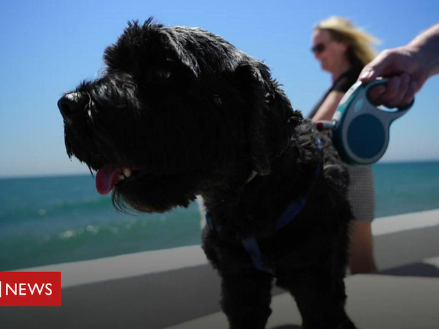 What will Brexit mean for expat dogs?