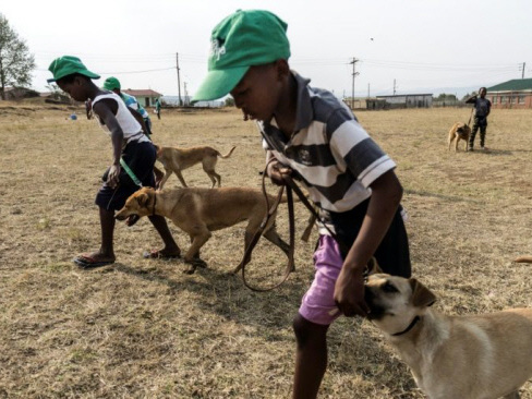 Dogs shielding S.Africa's youth from township violence