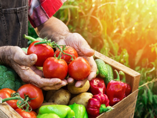 Demystifying food systems transformation: 10 key principles for success