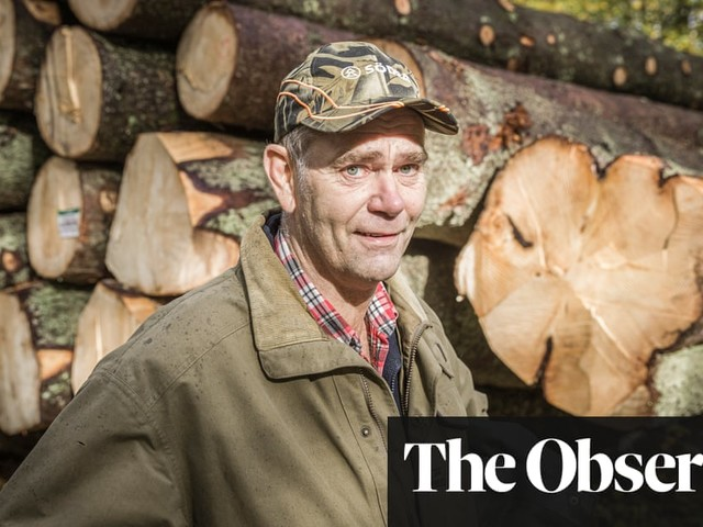 Sweden's green dilemma: can cutting down ancient trees be good for the Earth?
