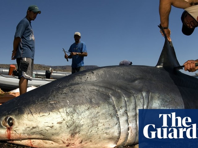 World's fastest shark added to list of vulnerable species to regulate trade