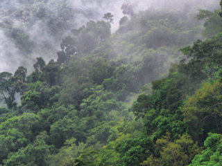 Global Briefing: Colombia to host pre-COP biodiversity summit