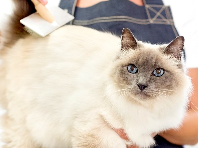 Chateau Marmont Threatens Cat Grooming Service Cateau Marmont With a Lawsuit