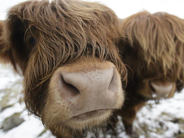 UK Weather: Snow Forecast For Scotland