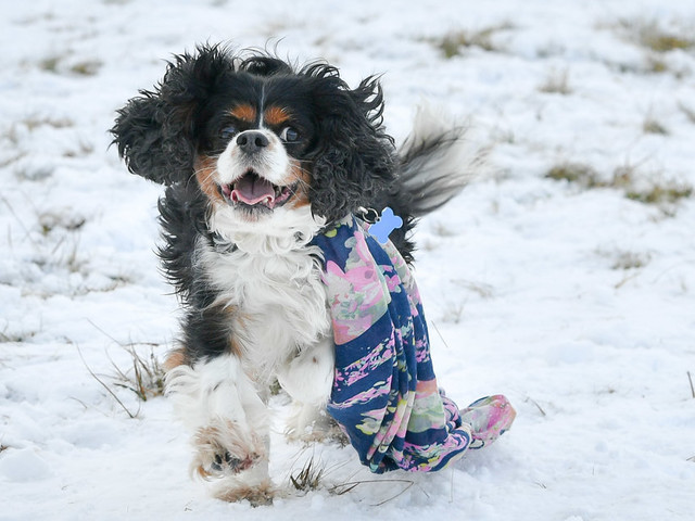 UK Weather Forecast: It's Cold But Don't Worry Because Winter Is About To Get 'Traditional'