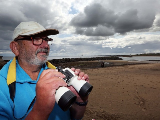 Want to see dolphins in Northumberland? This scientist can tell you the exact day and time to do it