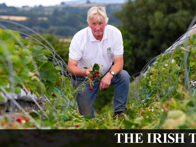 Strawberry farmer loses €200,000 of fruit due to hot weather