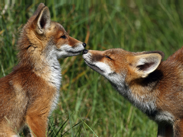 On Wasps And Foxes: Rethinking Our Relationship With Animals