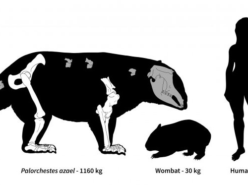 For millions of years, eastern Australia was home to 2,200-pound marsupials with giant claws