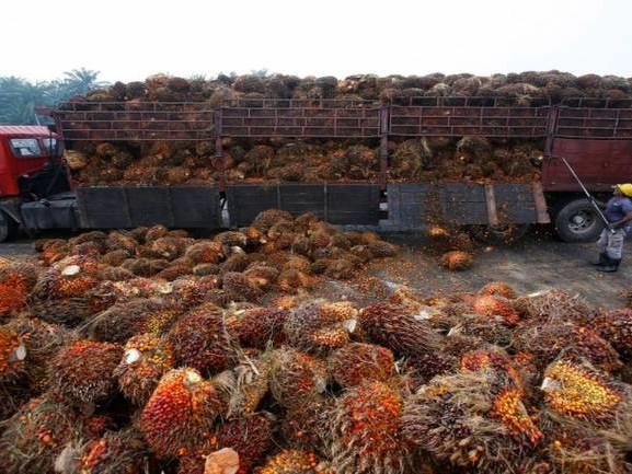 Palm oil long-term outlook cautious over global demand worries
