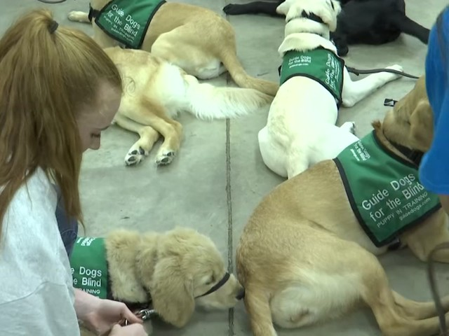 Dobie High School students train dogs for the visually impaired