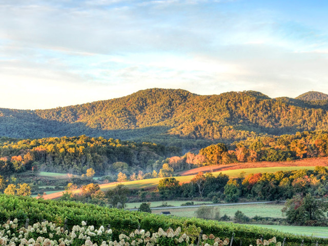 What Winemakers Want You To Know About Virginia's Wine Renaissance