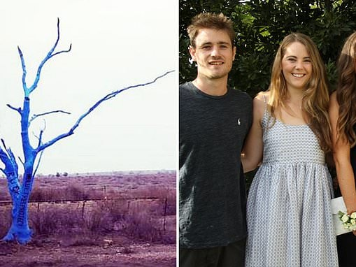 Solitary blue tree painted in tribute to man who died by suicide is found burned to the ground