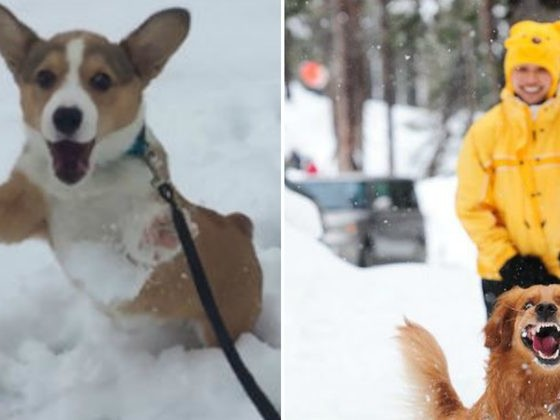 These 20 Animals Experiencing Their First Snow Days Are Too Good For This World