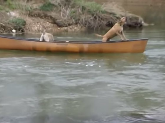 Two Dogs Were Trapped In A Canoe, But Wait Until You See Who Ended Up Saving Them