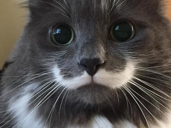 17 Funny And Beautiful Cat Markings That Prove They'll Always Be Prettier Than Us