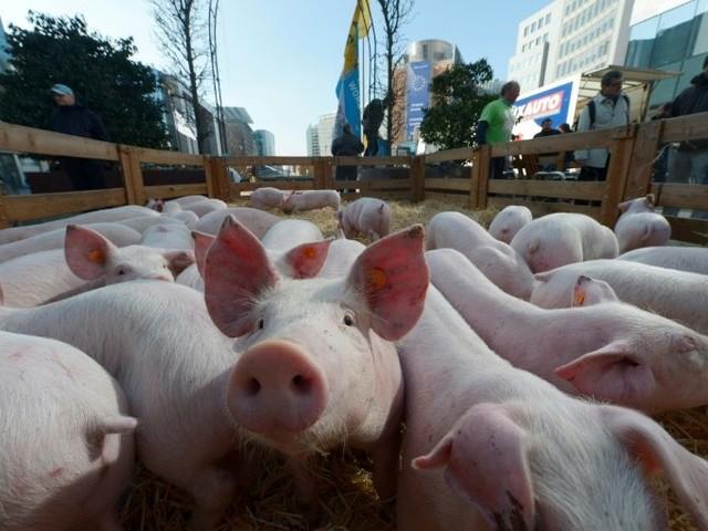 EU urges member states to toughen swine fever controls