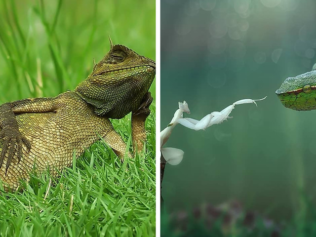 Photo Of A Lizard Chilling In The Sun Goes Viral (+21 More Shots By This Photographer)