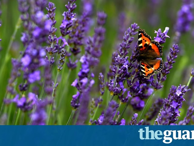 Encouraging insects back into arable land | Letters