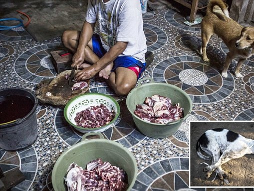 Dogs trussed up as they wait to be butchered in Indonesia