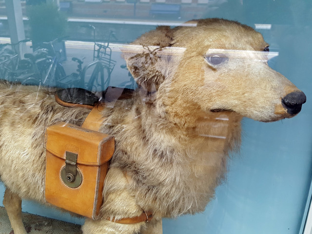 A glass case, a dead dog, and Slough train station