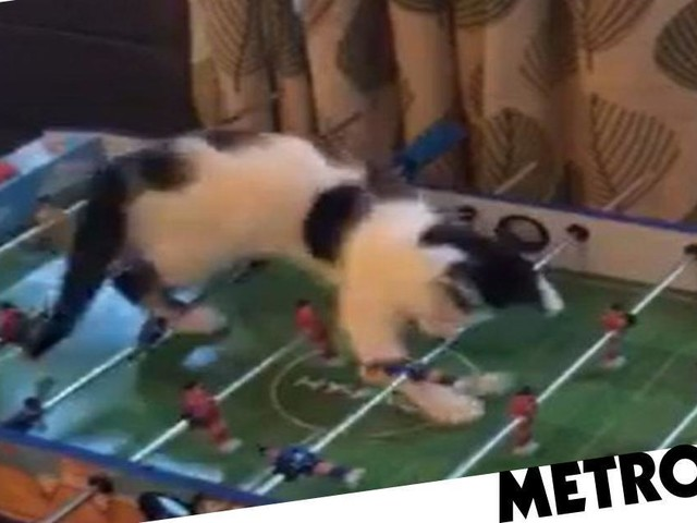 Oreo the 'bonkers' kitty loves to play table football by himself