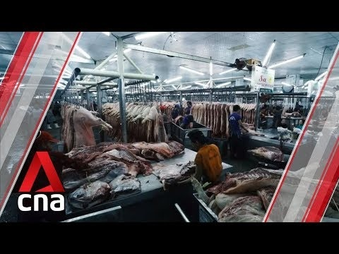 Millions Of Pigs Killed Over Swine Fever Concerns In Asia