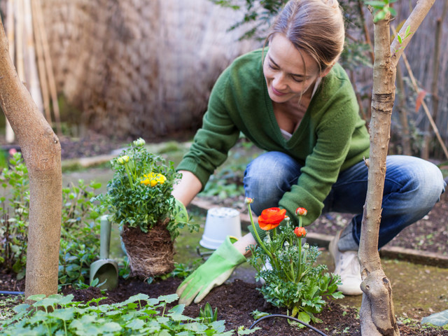 Where to buy garden bedding plants and compost online for delivery?