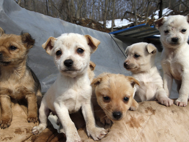 Britain - A Nation Of Pet Lovers - Must Stand Up For Animals Overseas