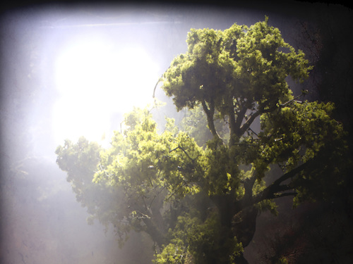 Tree Of Life: Mat Osman's Debut Novel, The Ruins