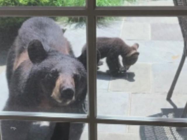 Residents On High-Alert After Black Bears Forage In Mahwah Neighborhood