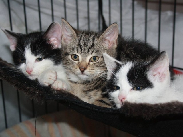 Guest Star: Knine & Kitty Care saved me and my family