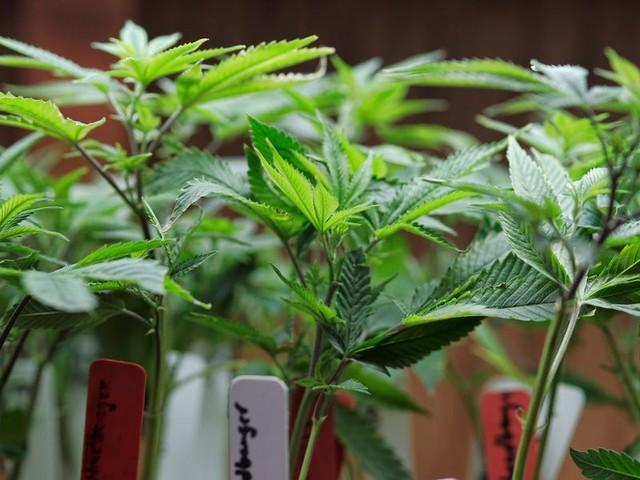 Amazon lobbying on legalization