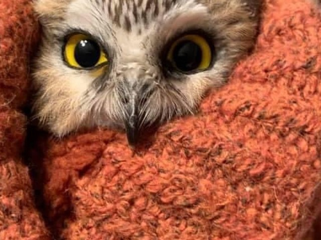 The Rockefeller Christmas Tree Owl Is Giving Me Hope for 2020