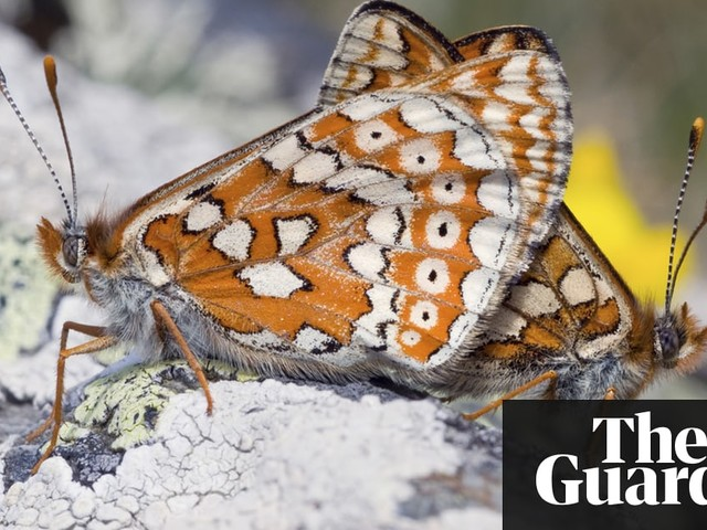 'It's given the children a love of wildlife': the schools letting nature in