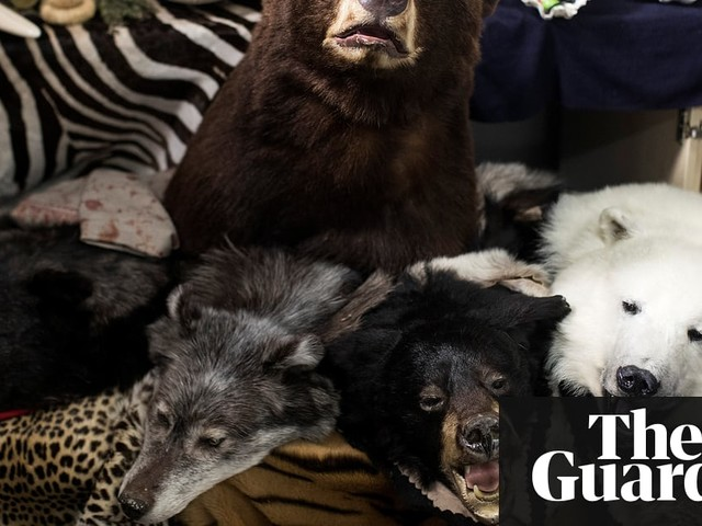 Illegal online sales of endangered wildlife rife in Europe
