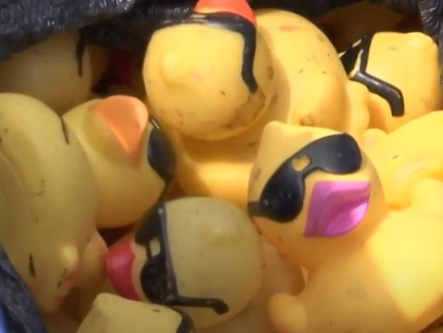A City In Texas Aims World Record For Lining Up Rubber Ducks
