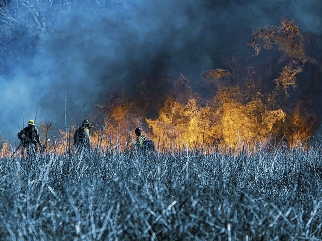 Prescribed Burning: Fighting Fire With Fire in the American West