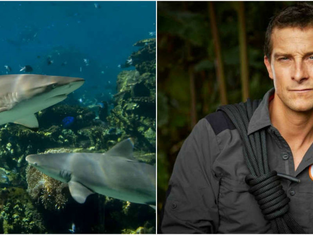 Bear Grylls' New 'Adventure Park' Will Let People Swim With Captive Sharks