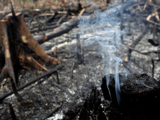 The Amazon Is In Flames. But Brazil's Past Can Show The Path Forward.