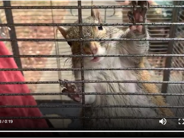 Meth-fed 'attack squirrel' found caged in Alabama home during drug bust, cops say