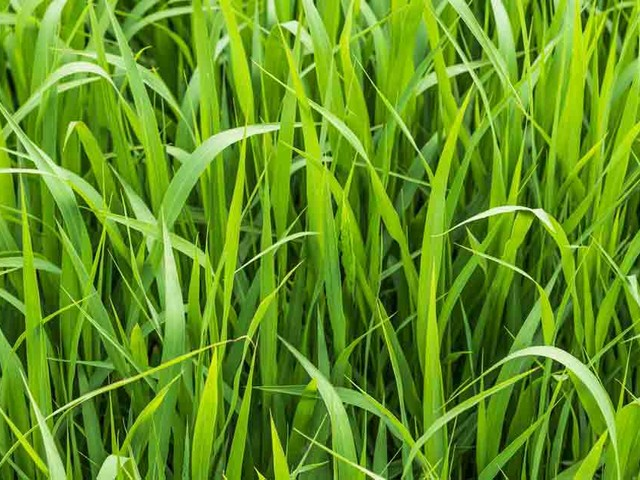What you need to know about sedge