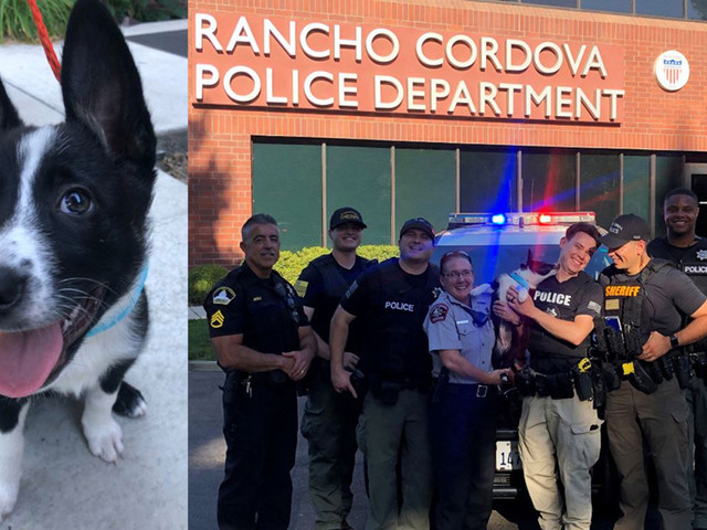 Rancho Cordova Officers Serve Neighbor Search Warrant To Get Back Family's Dog