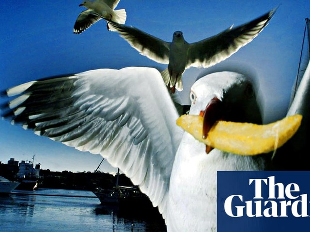 How one woman saved our snacks from seagulls: 'Eat with your back to the wall'