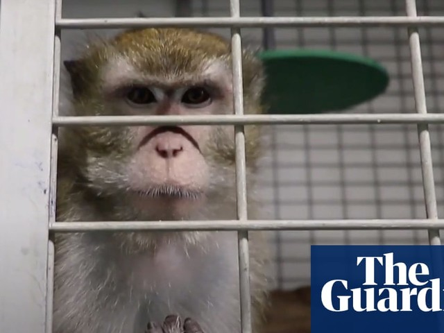 Animal testing suspended at Spanish lab after 'gratuitous cruelty' footage
