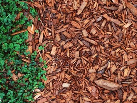 Four Important Things to Know About Using Cedar Mulch