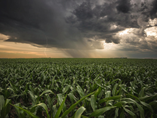 """""""We're Already Starting To Ration Our Corn"""" - Perfect Storm Could Send Spot Prices Higher"""