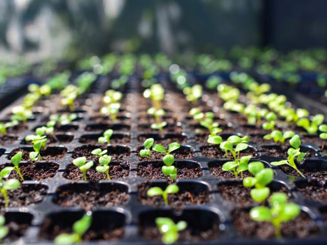 How to Start Seedlings: 5 Tips