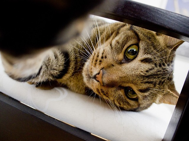 What is the Lower Urinary Tract Disease in Cats