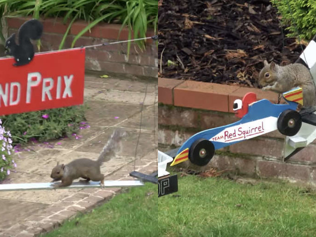 Guy Builds Huge, Incredible Racetracks For Squirrels In His Backyard